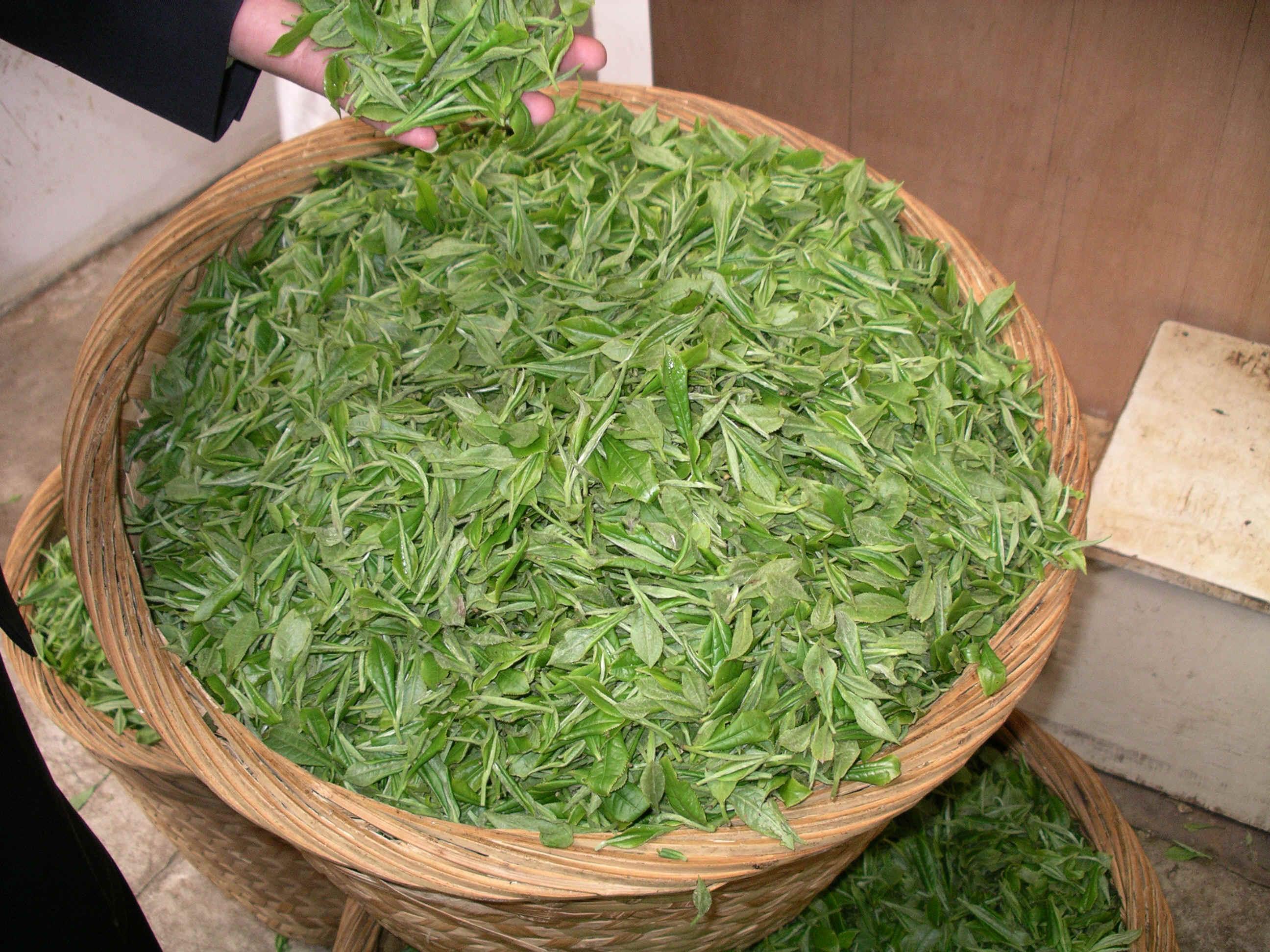 Tianhu greentea.JPG (3425549 bytes)